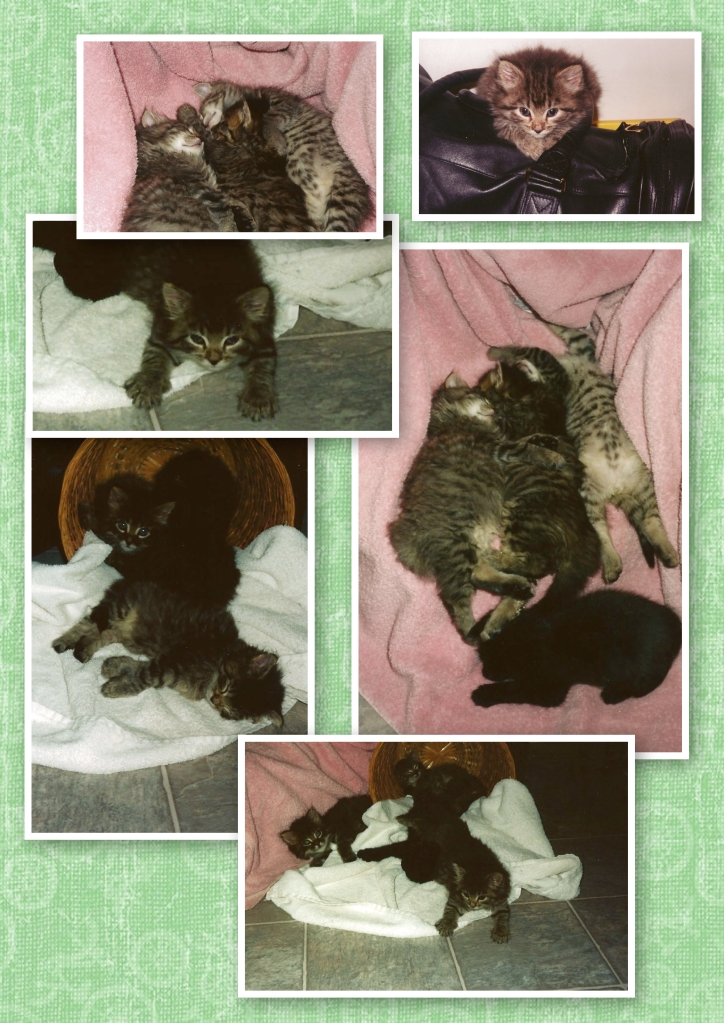 Kitty Collage 3